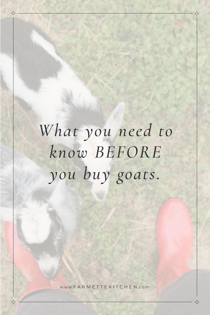We were lucky to buy our goats from a knowledgeable breeder who shared a wealth of information that helped us tremendously. Before you buy goats you will need to decide size, breed, and gender. You will also need to make decisions about horns, vaccines, and fencing. Read more...