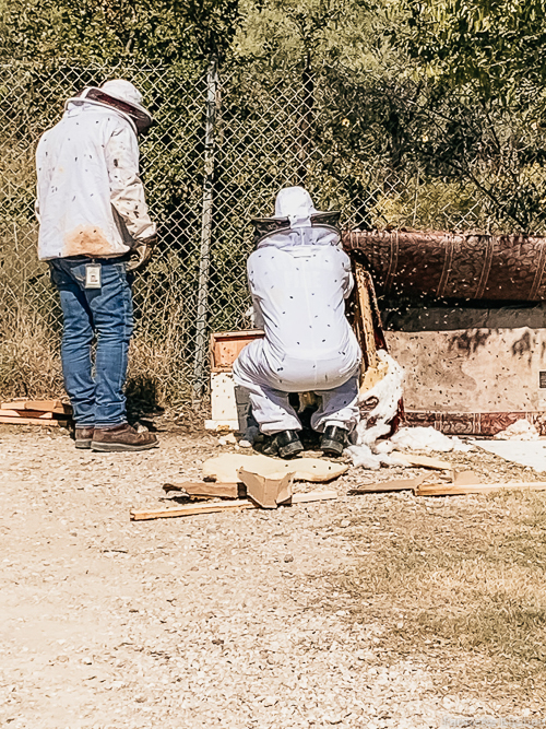 two men removing bees from a couch