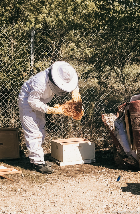 firefighter putting relocated bees in bee box
