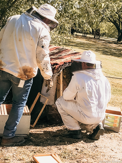 man in bee suit next to bee infested couch